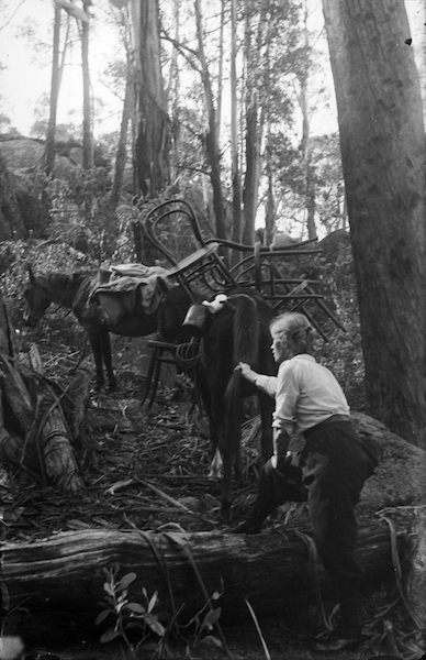 Guide_Alice_on_Mt_Buffalo_with_pack_horse,_c1912